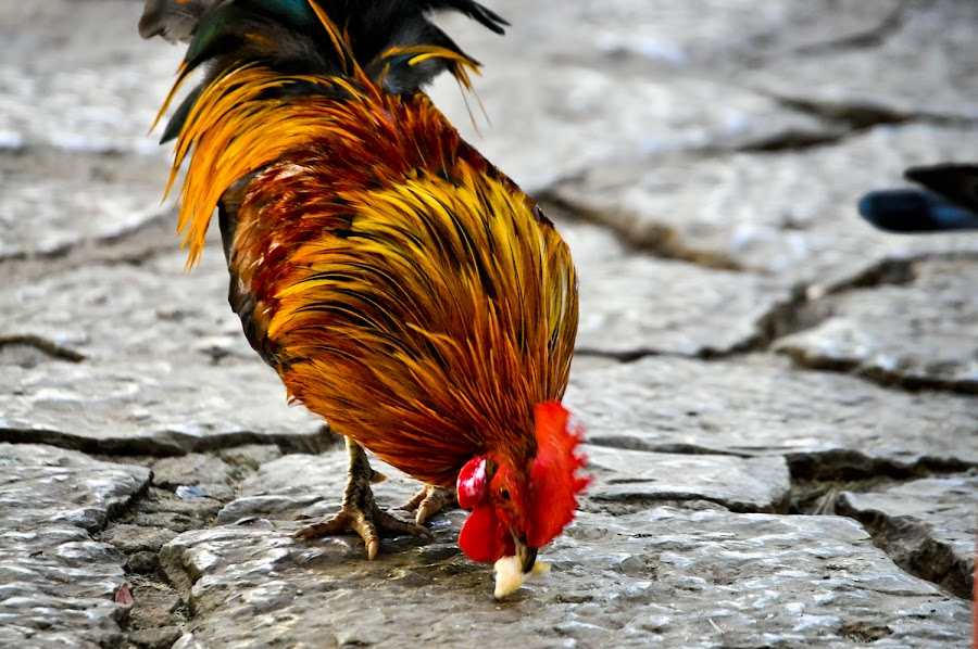 by Sylvia Weber - Animals Birds