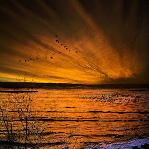 Twilight Sonnet Pixoto.jpg