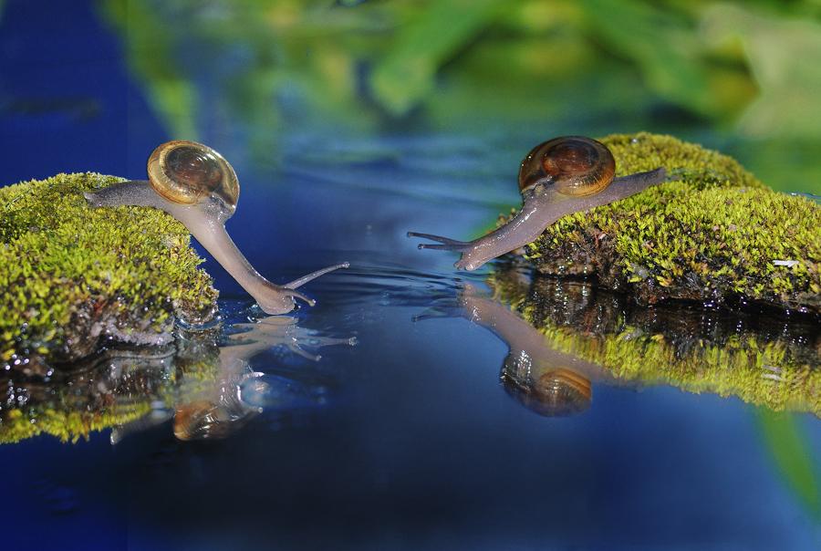 by Suhaimi Azzura - Animals Amphibians