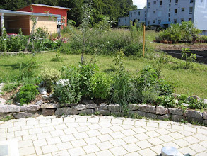 Photo: The herb garden