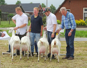 Photo: Rubriek 3: eenjarige witte geiten.  1a. Anne; 1b. Joke 40;  2a. Zwaanheuvel Marloes 14; 2b. Sanne.