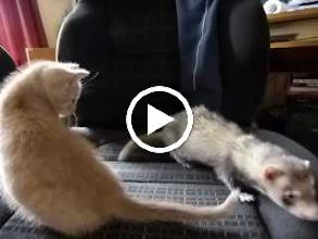 Video: Pontus and Peanut