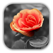 Color Splash Photo Editor - Photo Effect icon