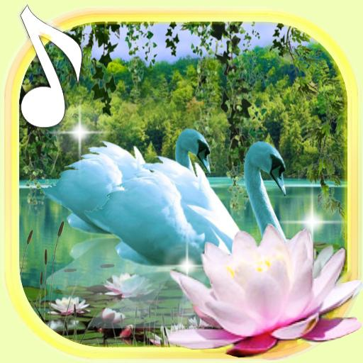 Swans And Lilies Live Wallpaper Android APK Download Free By Free Apps Factory