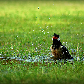 Quench! by Sandip Ray - Landscapes Prairies, Meadows & Fields ( pwcsummer )