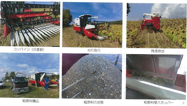 コンバインでのひまわり収穫