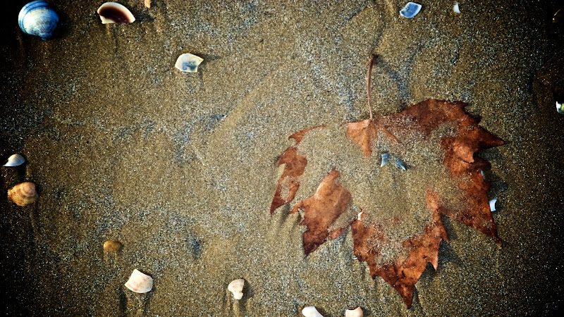 Leaf on the beach di luiker