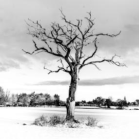 by Nigel Bishton - Black & White Landscapes