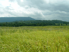 Photo: Khao Laem grassland. In the distance is Khao Laem peak