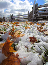 Photo: Golden leaves and snow under a wooden fence at Carriage Hill Metropark in Dayton, Ohio.