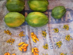 Photo: Papaya and stuff