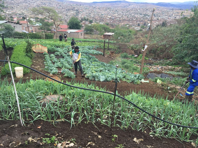 A vegetable garden project in Pietermaritzburg offers free food to those who cannot afford to pay.