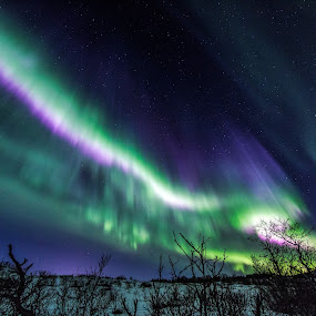 Aurora over forest by Benny Høynes - Landscapes Forests ( colorful, northern lights, aurora borealis, forest, norway )