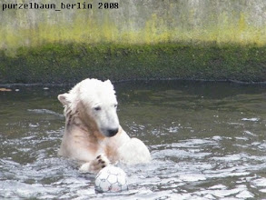 Photo: Knut bespielt Ball Nummer drei :-)