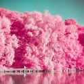 Analog Film Pink Camera-Palette,Photo editor,Paris icon