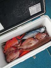 """Photo: 釣果です。 """"オオツさん""""の釣果。 サメに食われて・・・。"""