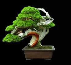 盆栽の木のアイデアのおすすめ画像5