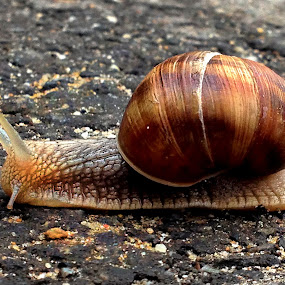 Route 66 by Claudiu Petrisor - Instagram & Mobile iPhone ( brown, spiral, slow, road, snail,  )