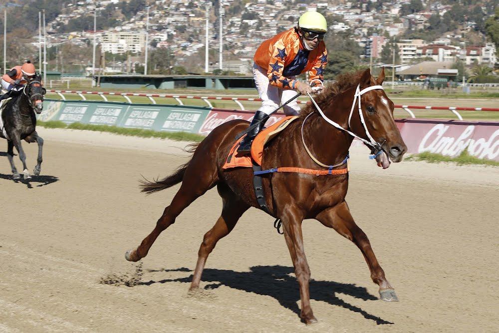 Desert Conquer (Arabian Spirit) se queda con Handicap (1200m-Arena-VSC).