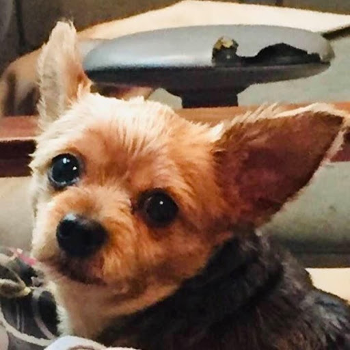 Foxy, MISSING Aug 19, 2019