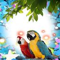 Macaw Birds Photo Frames icon