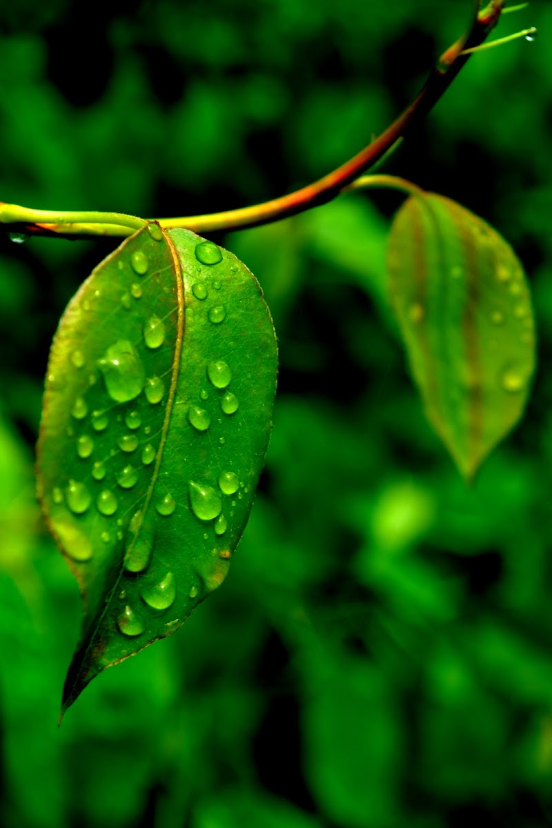 Green drops di margherita_messina