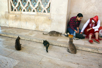 Photo: The national pet of Morocco - the cat
