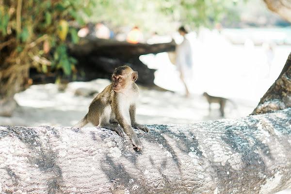Visit Monkey Beach