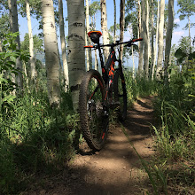 Photo: On an aspen-lined trail.