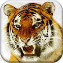 Bengal Tiger Live Wallpaper icon