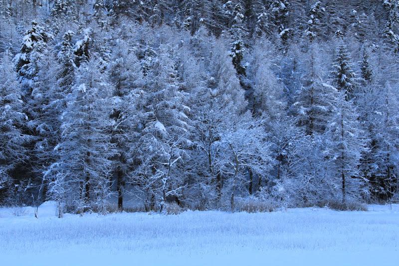 bosco incantato di smpaint