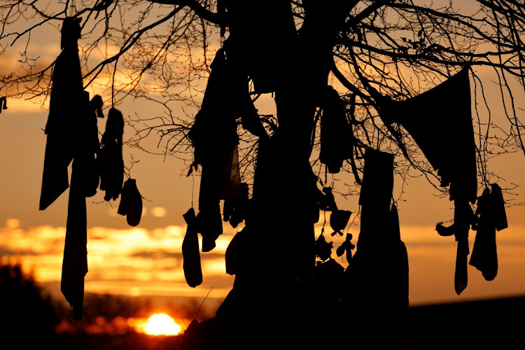A view of 'L'arbre à loques', a 'healing' tree to which people attach cloths as a ritual for good health according to Celtic tradition, amid the Covid-19 pandemic in Hasnon, France. Picture: REUTERS/Pascal Rossignol