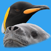 App Icon for Antarctic Wildlife Guide App in Czech Republic Google Play Store