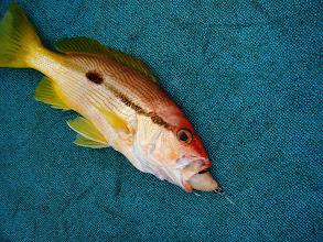Photo: ・・・ガクッ。  久しぶりのハシグチ魚でした。 さかなよーどこへ行ったの?