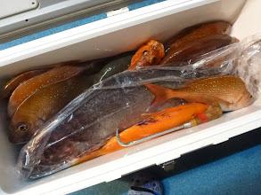 """Photo: """"クマガイさん""""の釣果。 真鯛、メダイ2匹、アカイサキ・・・でした!"""