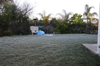 Photo: frost!!