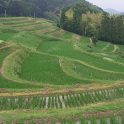 Japan:TerracedRiceFields JP139 icon