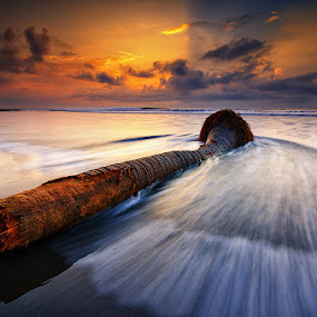 It Was a Beautiful Coconut Tree Once by Eggy Sayoga - Landscapes Beaches ( bali, tree, coconut, wave, beach, landscape )