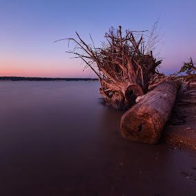 Rest by Chris Timmerman - Landscapes Sunsets & Sunrises ( moon, twilight, trees, night, beach, landscapes, nebraska )