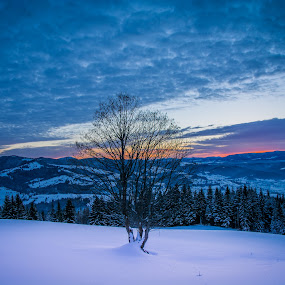 Winter tree by Adrian LUPSAN - Landscapes Mountains & Hills ( winter, tree, snow, sunrise )