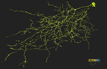 Photo: The first neuron ever mapped by gamers