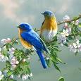 70 Bird Sounds and Ringtones apk