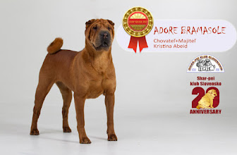 Photo: TOP Shar-pei 2015 suka