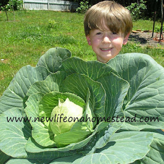 My Favorite Cabbage
