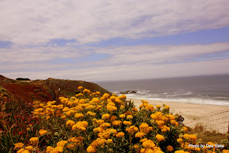 Photo: (Year 3) Day 29 - Wild Flowers and a Glimpse of a Beach