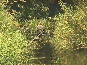 Photo: 0502232798  טיולי-ג'יפים טיול-ג'יפים טיולי-ג'יפים  ג'יפים-בצפון  גיפים-בצפון   טיולי-שטח  טיול  טיולי  טיול-בצפון  ג'יפים-טיול  ג'יפים-בטבע טיולי-נחלים טיול-חוויה  טרקטורונים  רפטינג  בצפון  בגליל  ברמת-הגולן  בצפת  קברי-צדיקים  טיול  טיולים  בטבע  נחלים  מסלול  מסלולי-טיול  חצבאני  טיול-ג'יפים טיולי-ג'יפים  בניאס  פארק-הירדן  טיול-ג'יפים טיולי-ג'יפים  הירדן-ההררי  נחל-הדן  טיול-ג'יפים טיולי-ג'יפים