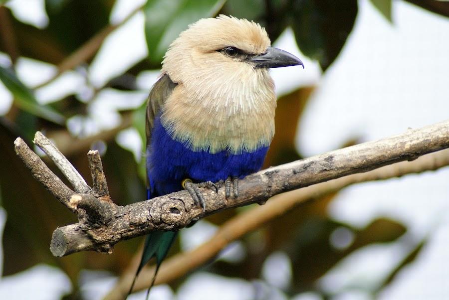 by Colin Ellis - Animals Birds