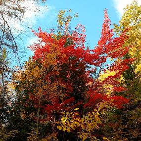 by Sandy Davis DePina - Nature Up Close Trees & Bushes (  )