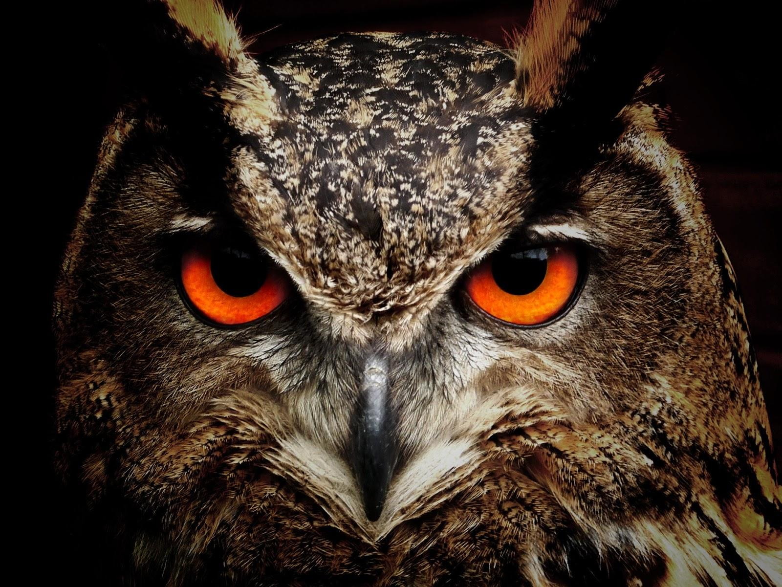 photography of an owl