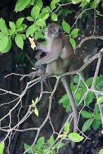 Photo: Monkey beach